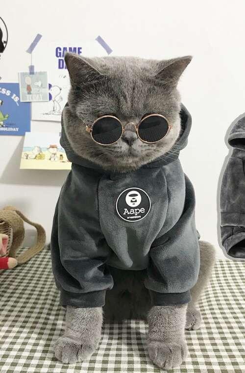 Kattkläder